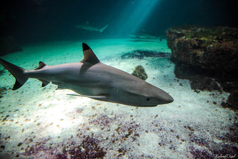 Aquarium 7ème continent