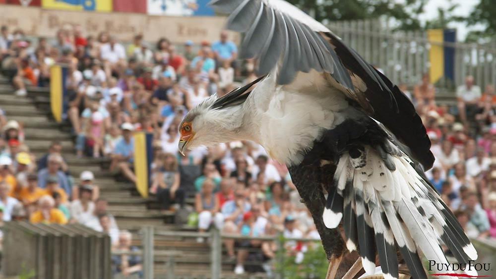les oiseaux puy du fou
